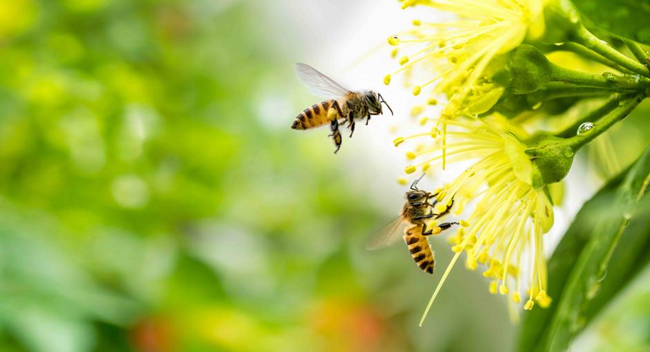 perfecta Fenster - Aktuelles - Bienenfreundlicher Garten