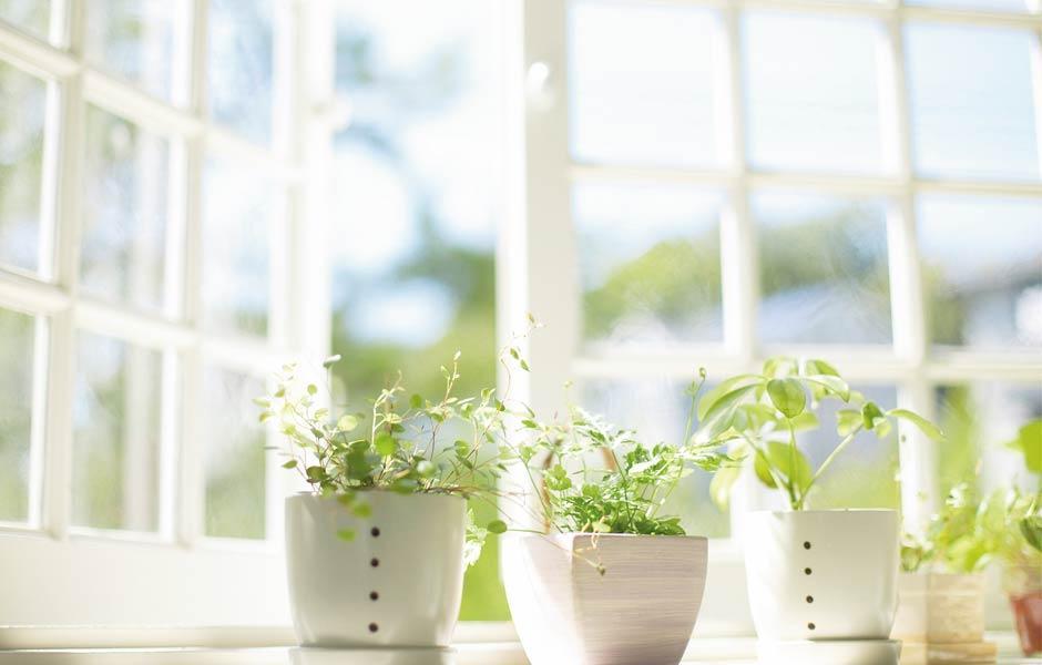 Der Frühling ist da und die Sonne scheint durchs Fenster.