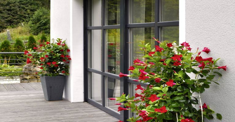 perfecta Produktwelt Fenster