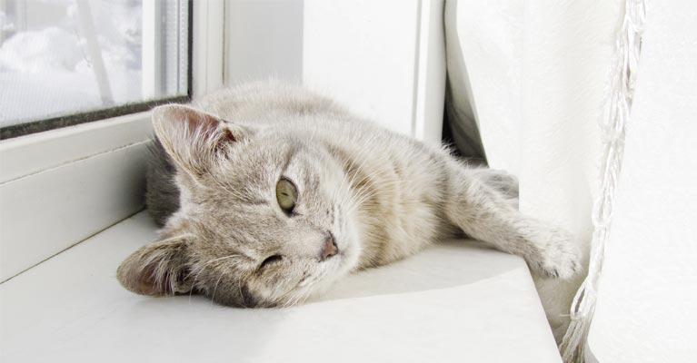 perfecta Fenster & Türen bieten optimalen Schallschutz – das weiß auch diese Katze