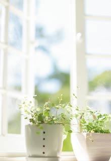 Der Frühling ist da und die Sonne scheint durchs Fenster